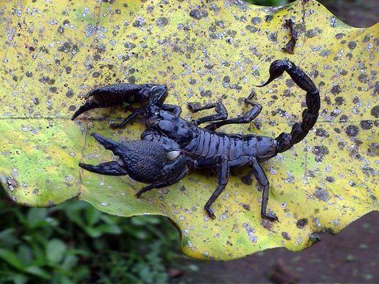 Ein Skorpion: mir als Sternzeichen lieber :-)