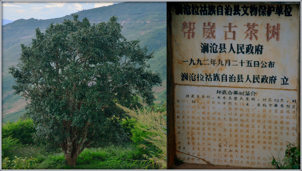 Ein sogenannter Königsteebaum mit dazu gehöriger Tafel