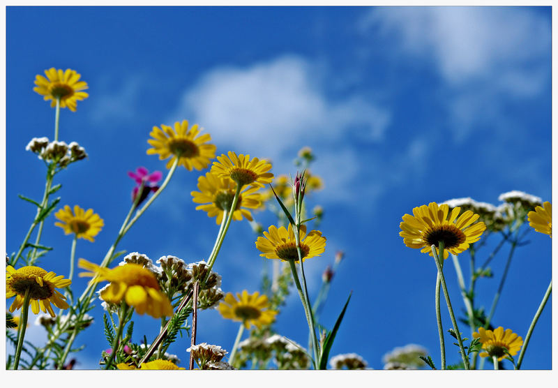 Ein Sommer Tag !!! ; - )