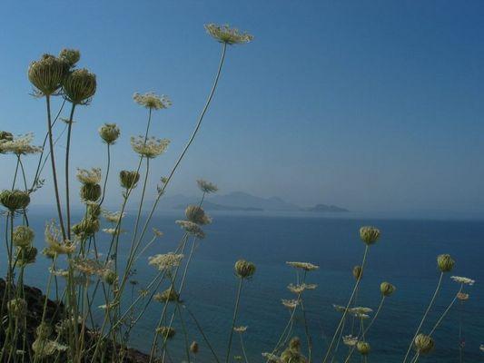 Ein Sommermorgen auf einer griechischen Insel