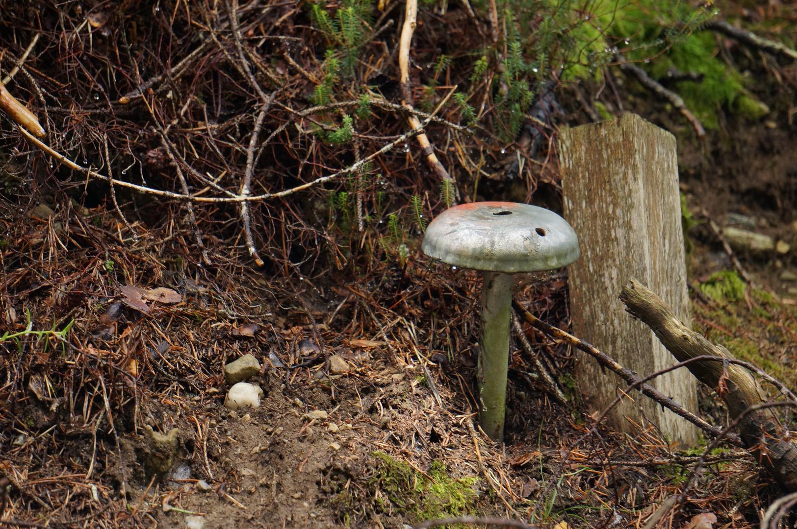 Ein sonderbarer Pilz