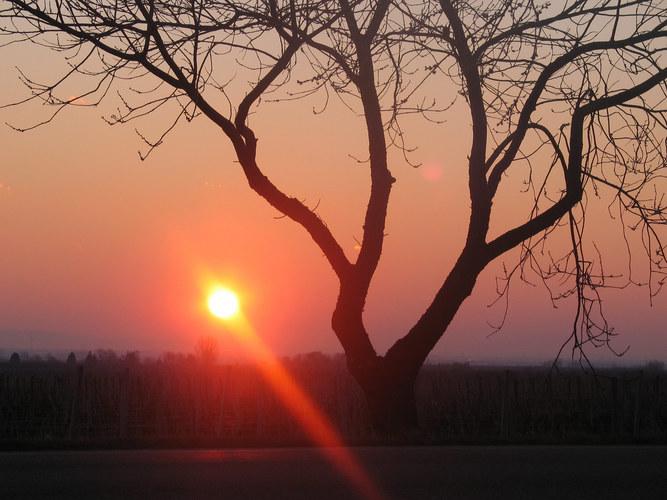 ein Sonnenaufgang in der Pfalz