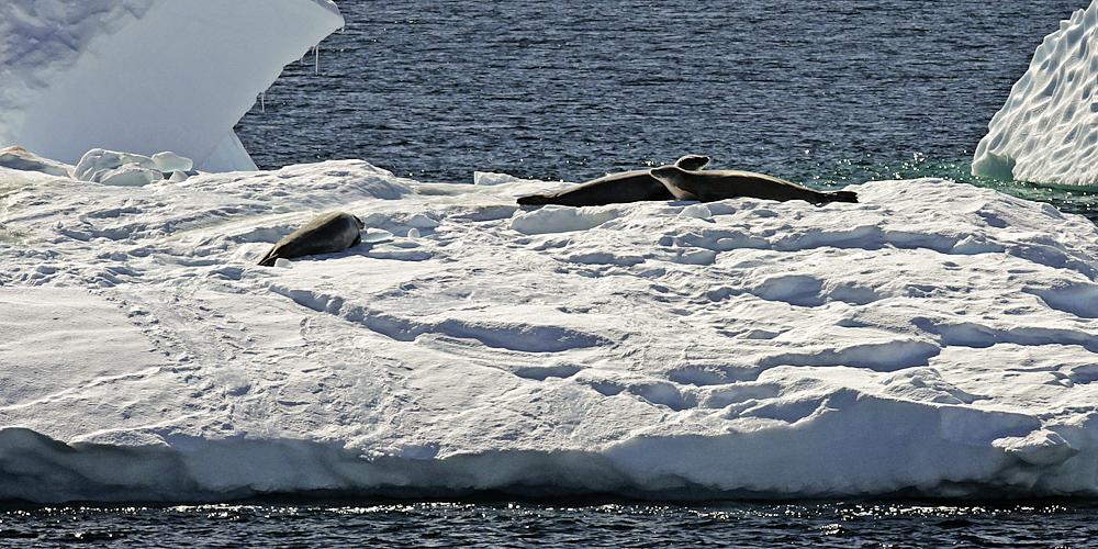 ein sonnenbad im arktischen sommer