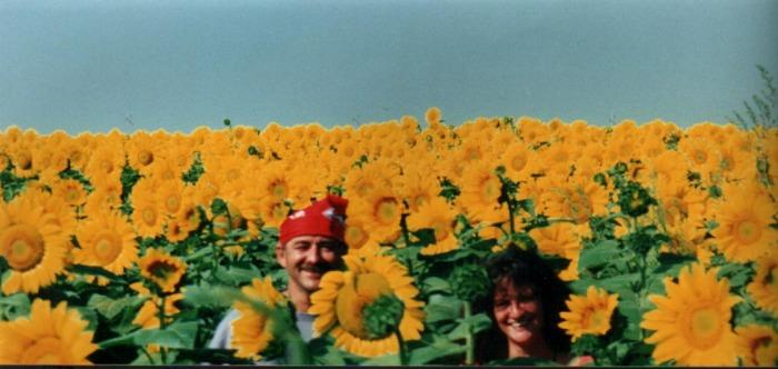 Ein Sonnenblumenfeld