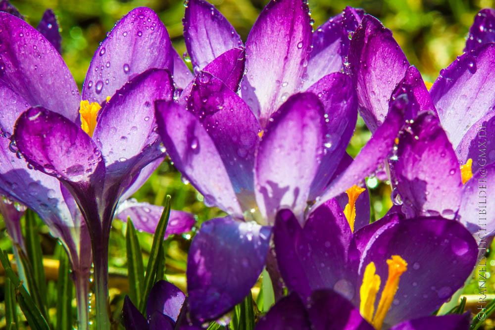 Ein sonniger Nachmittag im Garten...