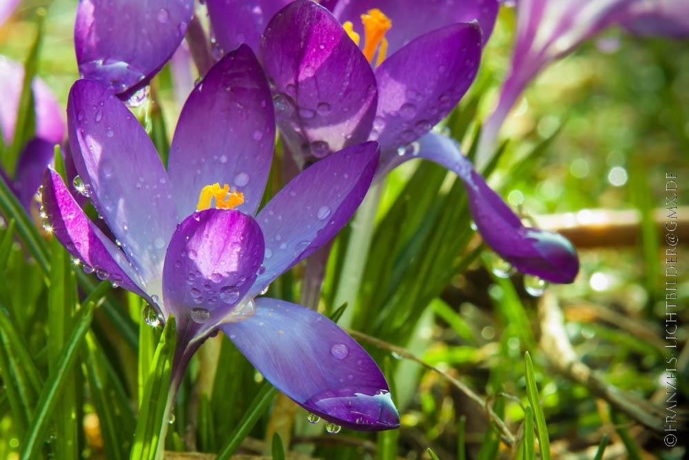 Ein sonniger Nachmittag im Garten 2...