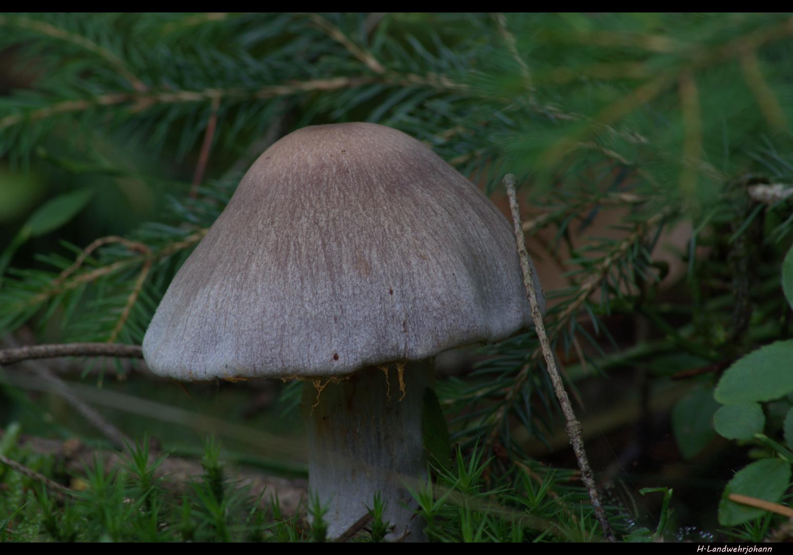 Ein Sonntag im Wald 4