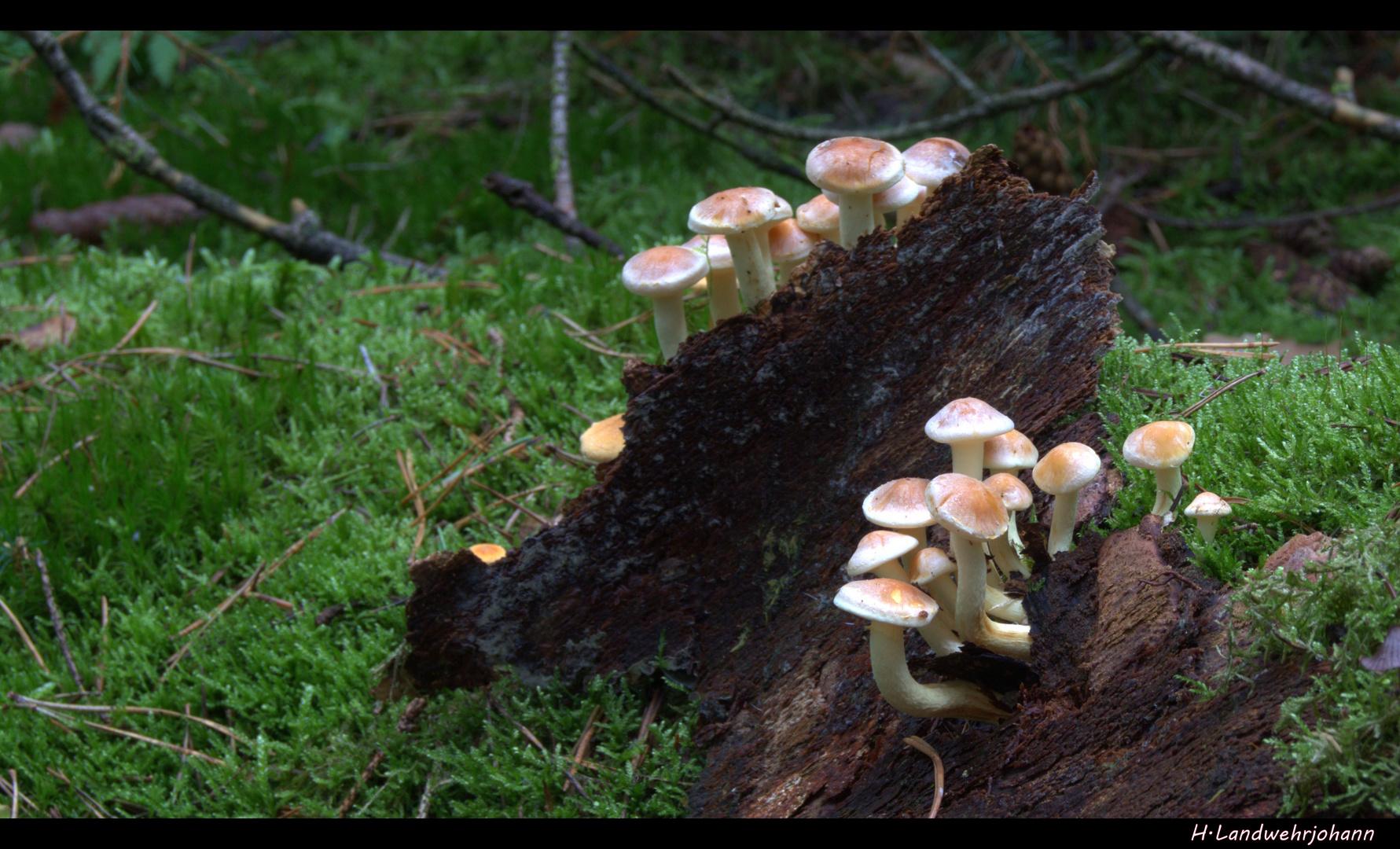 Ein Sonntag im Wald 7