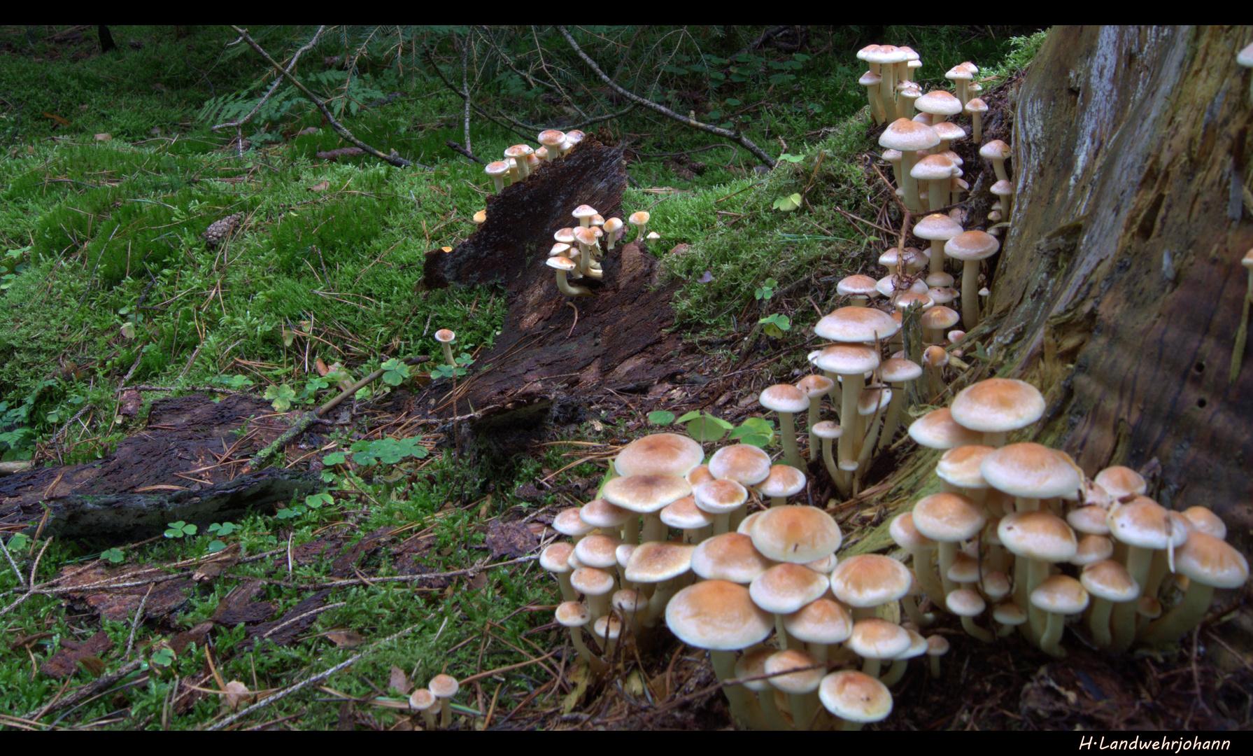 Ein Sonntag im Wald 8