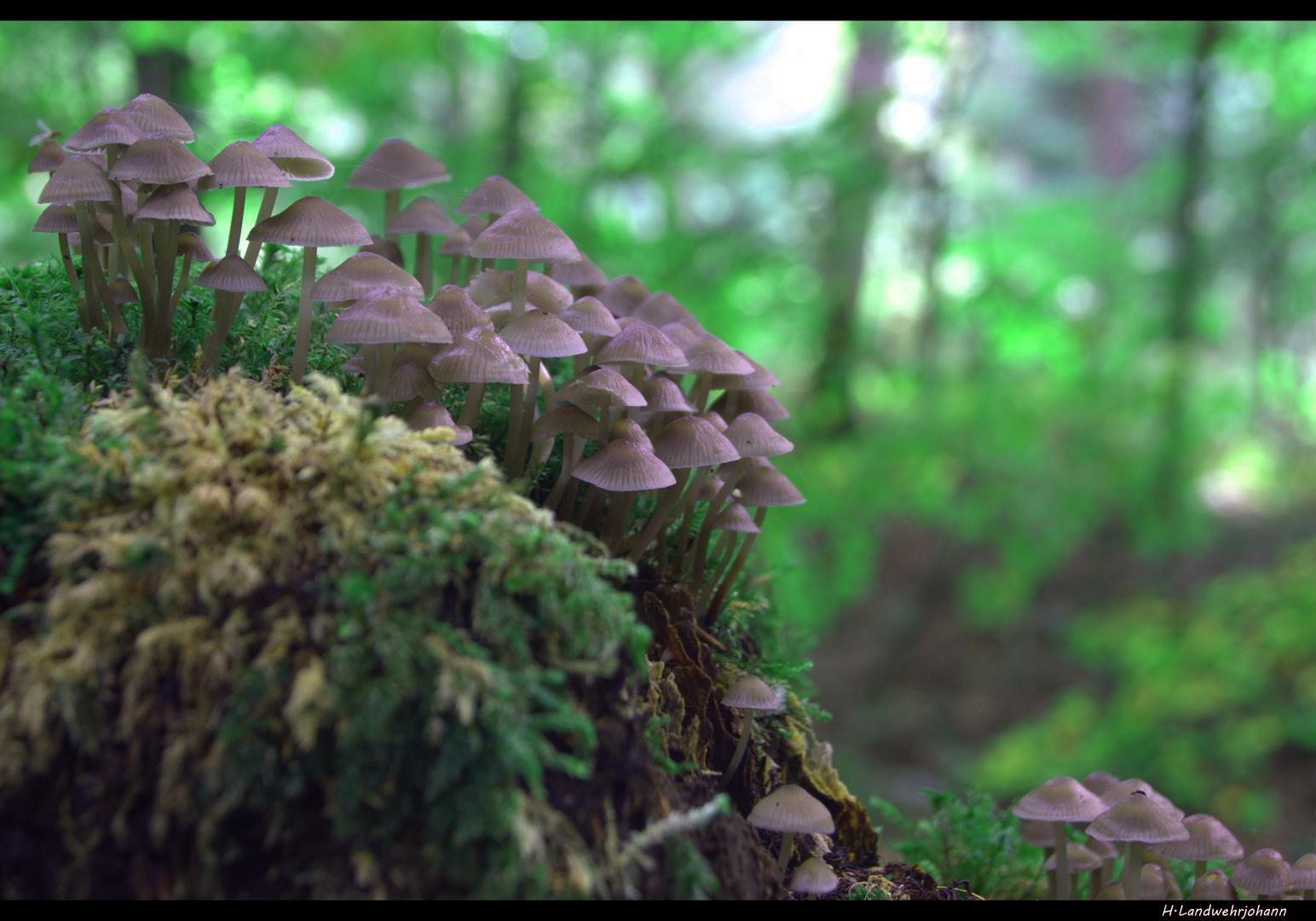 Ein Sonntag im Wald 9