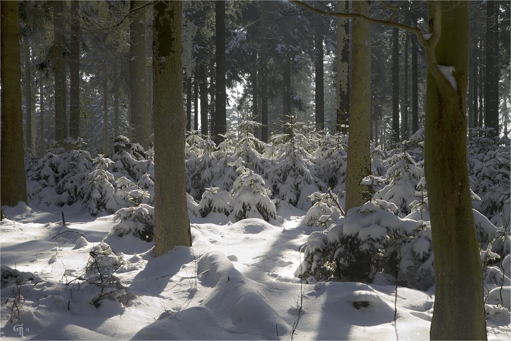 Ein Spaziergang im Winterwald