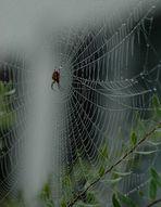 Ein Spinnen - Kunstwerk