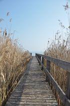 Ein Steg des Bodensees