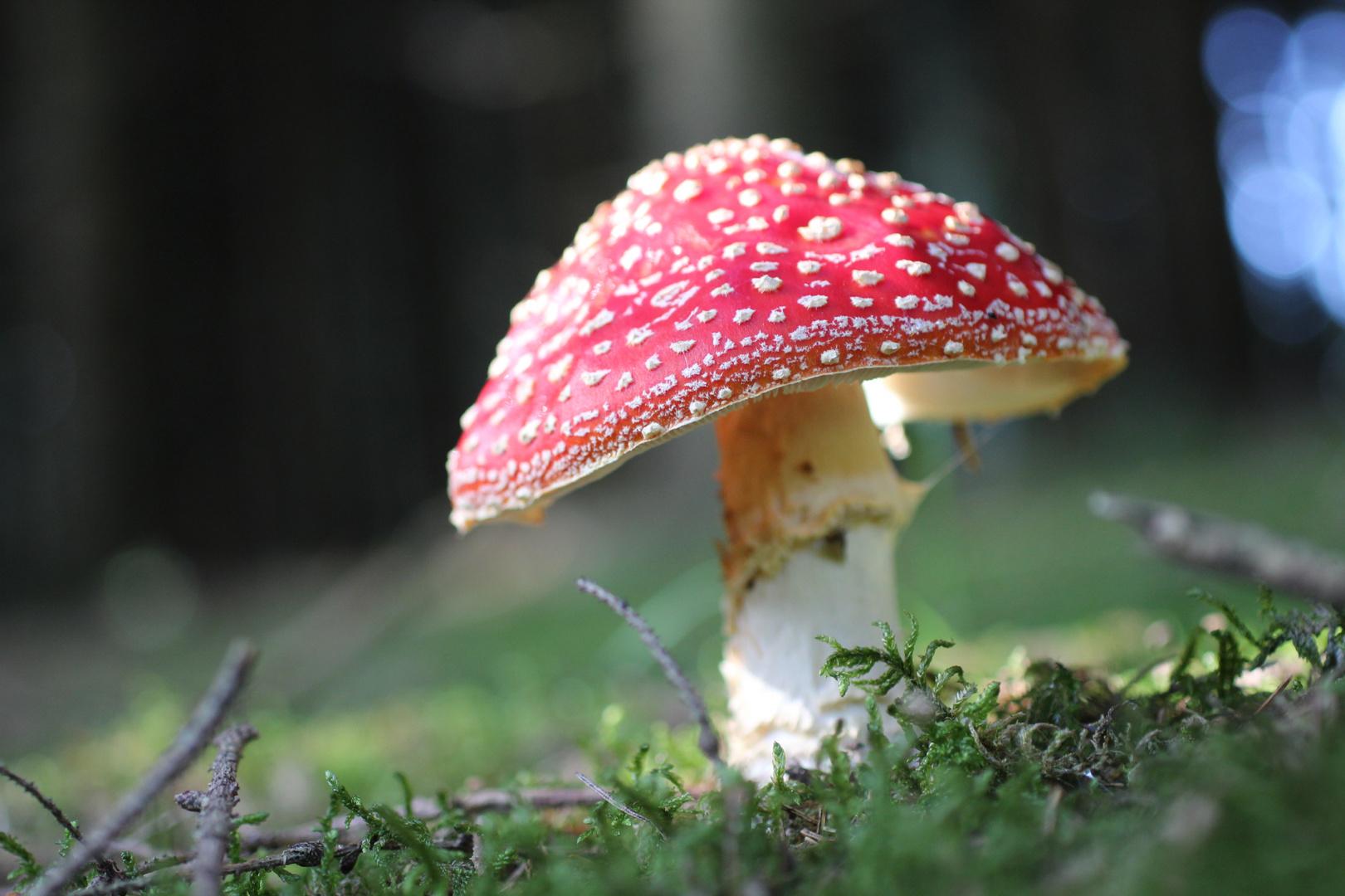 Ein .... steht im Walde