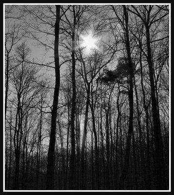 Ein Sternlein steht im Walde