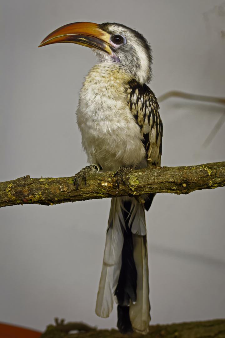 Ein stolzer Vogel