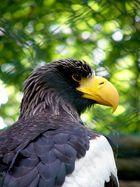 Ein stolzer Vogel ...