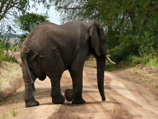 Ein Stop um den Elefanten vorbei zu lassen, im Queen Elizabeth NP