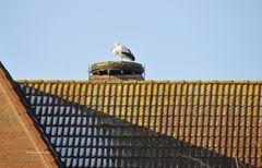Ein Storch auf dem Dach macht noch keinen Frühling