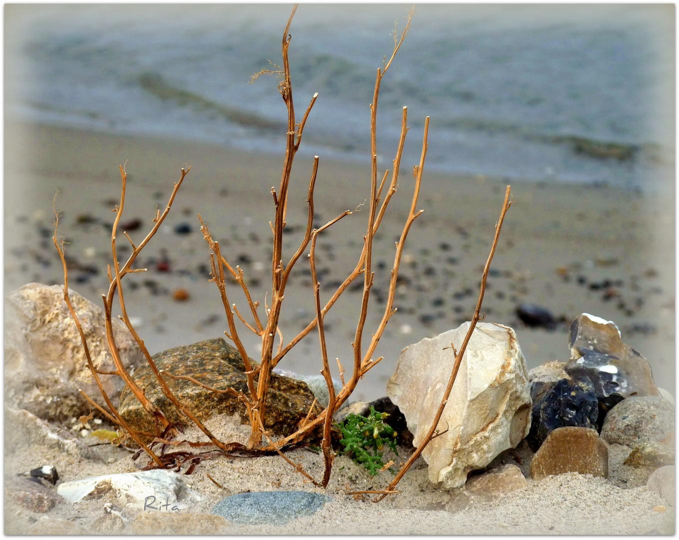"""ein """"Strandgut""""..."""