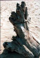 Ein Stück Baum