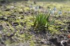 Ein Stück Frühling