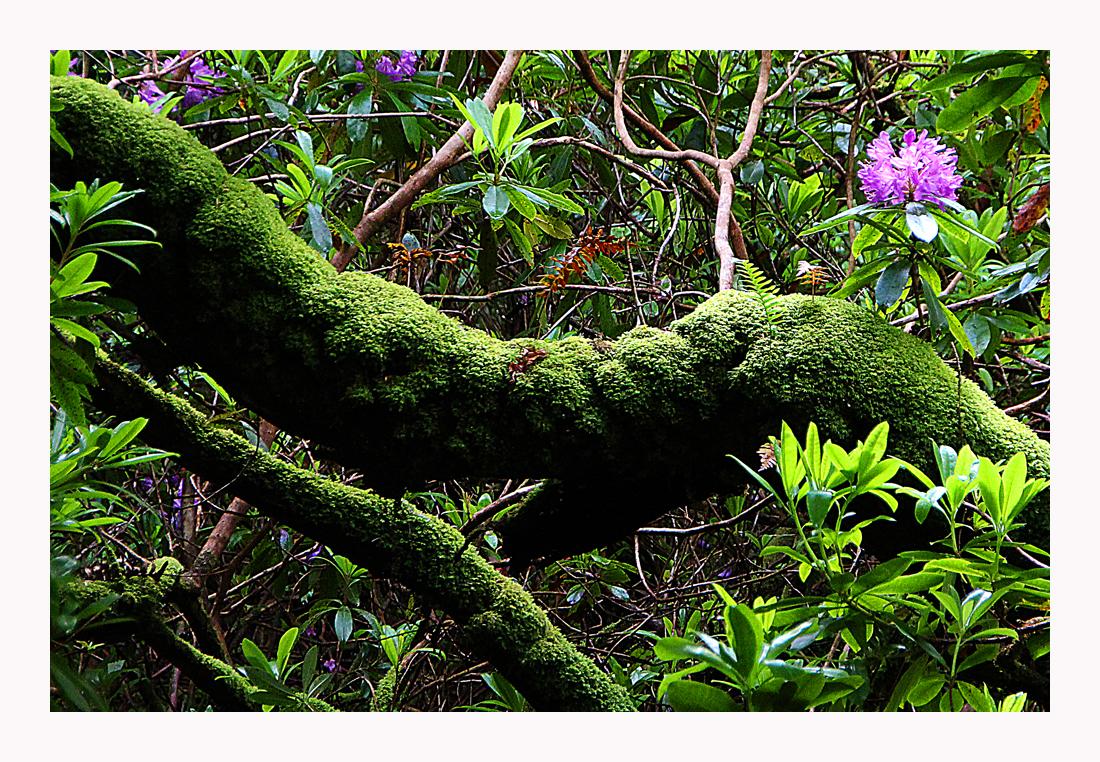 Ein Stück Urwald...