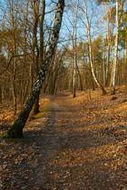 Ein Stück Wald ....Immer wieder schön...