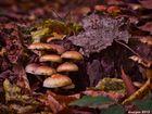 Ein Stück Waldboden im Herbst.