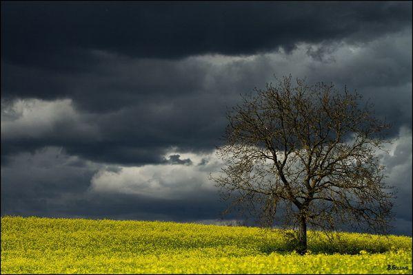Ein Sturm zieht auf