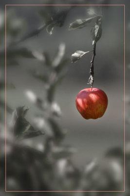 Ein Südtiroler (Ein einsamer Apfel reload)
