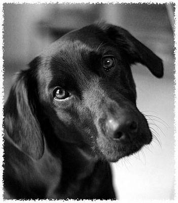 Ein süßer Hundeblick rettet den Tag!