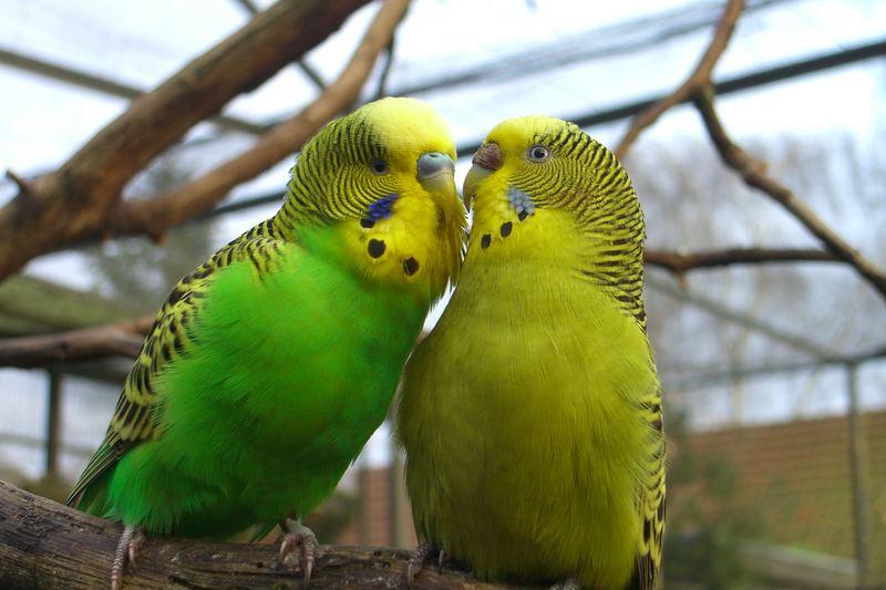 Ein süsses Paar - nicht wahr!?