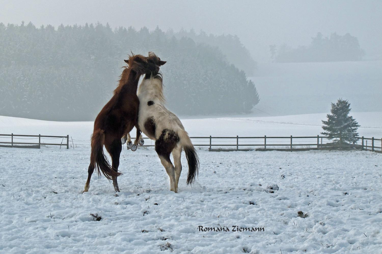 Ein Tänzchen im Schnee