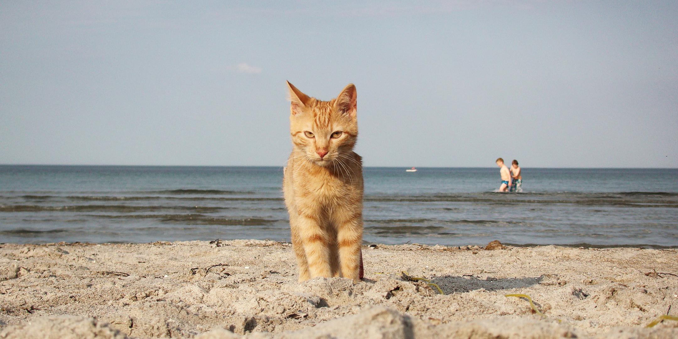ein Tag am Meer 3