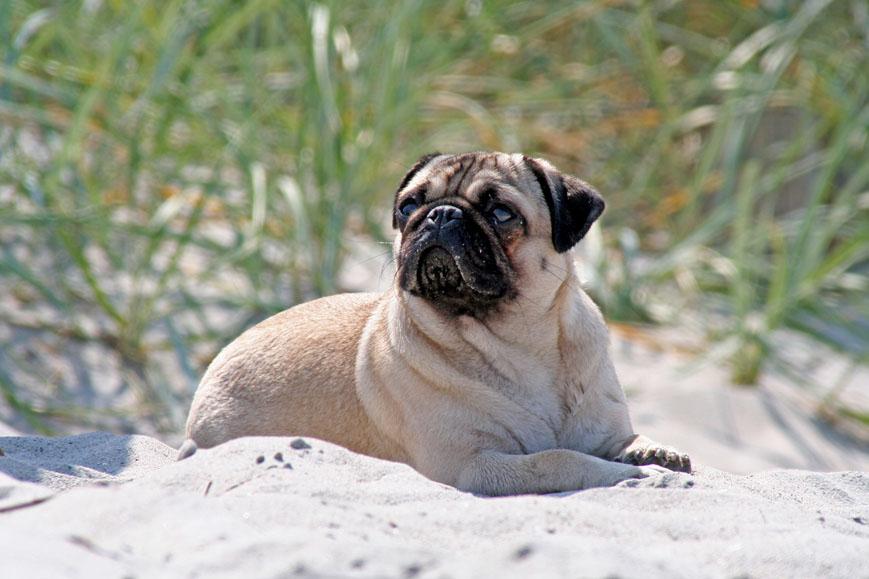 ...ein Tag am Strand 1...
