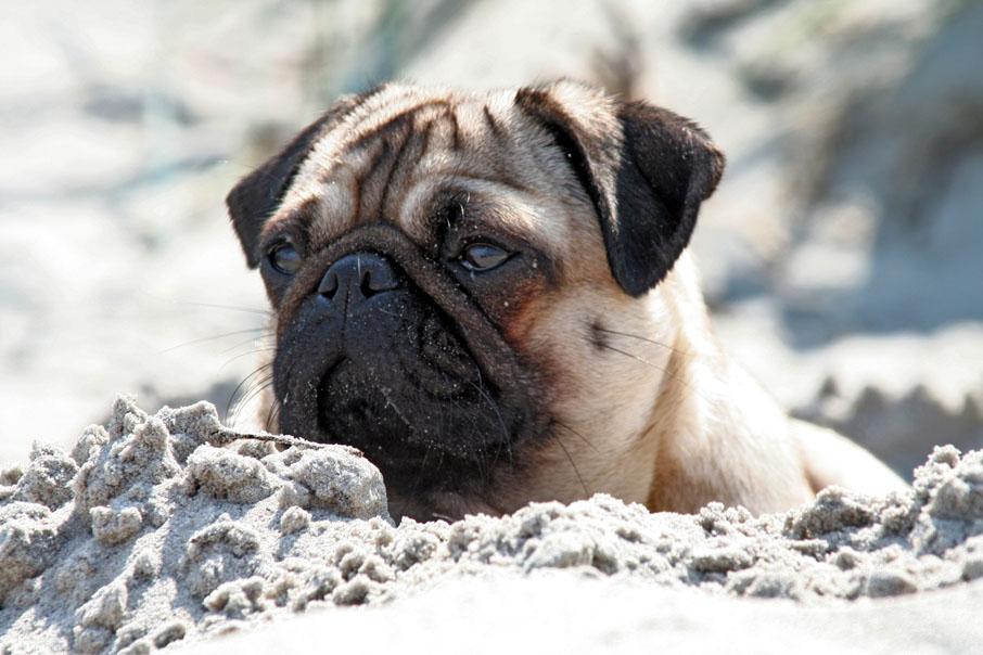 ... ein Tag am Strand...