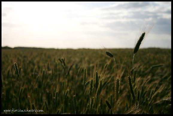 Ein Tag auf dem Feld geht zu Ende