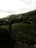 Ein tag Im gruenen