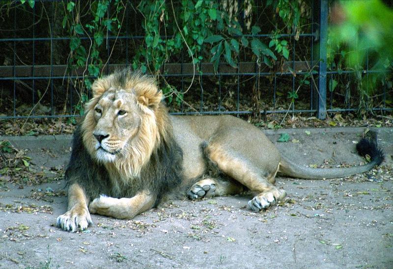 Ein Tag im Kölner Zoo