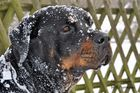 Ein Tag im Schnee !