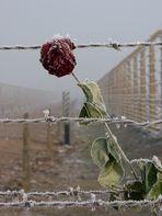 Ein Tag im Vernichtungslager (3)
