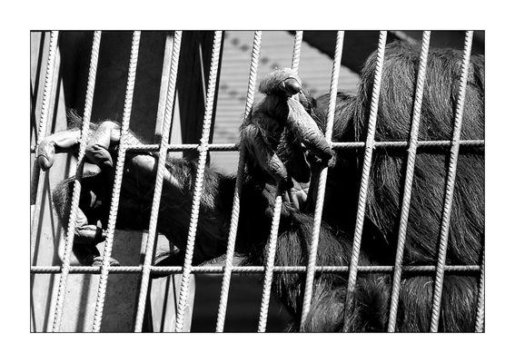 Ein Tag im Zoo III