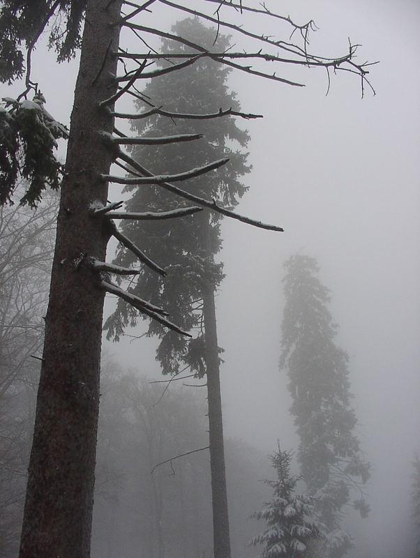Ein Tag vor der Wintersonnenwende