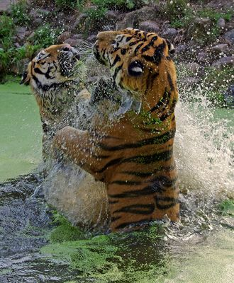 Ein Tanz im Wasser