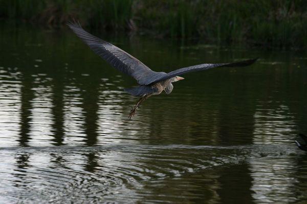 Ein Teich im Ruhrpott