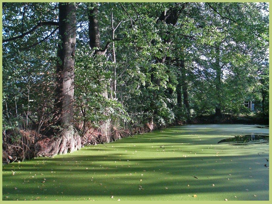 Ein Teich voll Entengrütze
