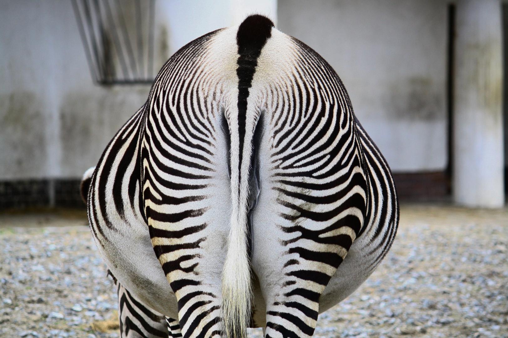 Ein Tier