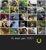 Ein tierisch gutes 2012 !