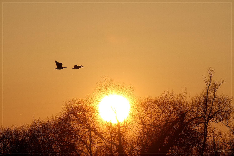Ein tierischer Sonnenuntergang 2013